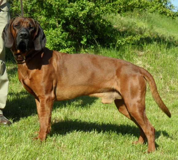 138ème Championnat de France des chiens de race<